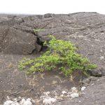 Vegetation im Hochland