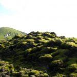 bemooste Landschaft bei Lakagigar