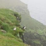 Papageientaucher auf der Halbinsel Langenes