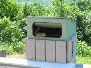 Das Hörnchen wohnt im Mülleimer und wollte uns angreifen
