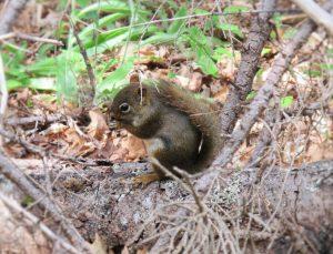 Hörnchen sieht man überall
