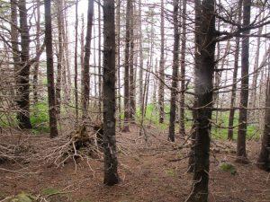 Durch den Wald zur Küste