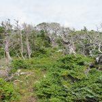 Wanderung zum Vogelfelsen - Cape St. George