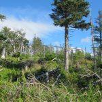 Elchfreie Zonen sollen den Einfluss auf die Natur testen - Gros Morne